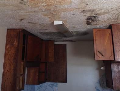 Mold Removal in CEDAR PARK Texas